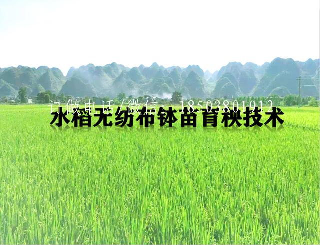 技术文章:水稻无纺布钵苗育秧技术